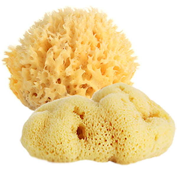 Natural Sponges (Honey Comb / Fine Silk)